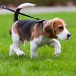 pixwords deutsch BEAGLE
