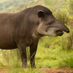 pixwords deutsch TAPIR