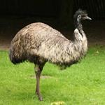 pixwords deutsch EMU