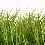 pixwords deutsch GRAS