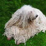 pixwords deutsch KOMONDOR